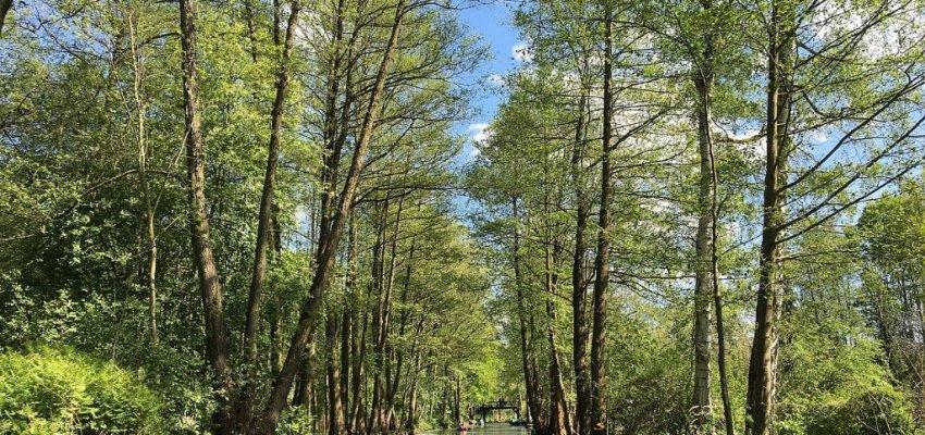 Spreewald - das Sagenhafte Wasserlabyrinth